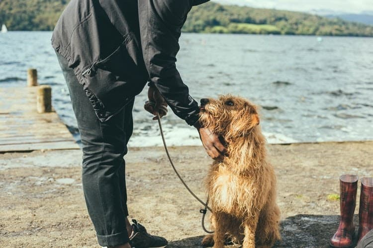 Companion Dog: Features, Selection Criteria, Best Companion Breeds