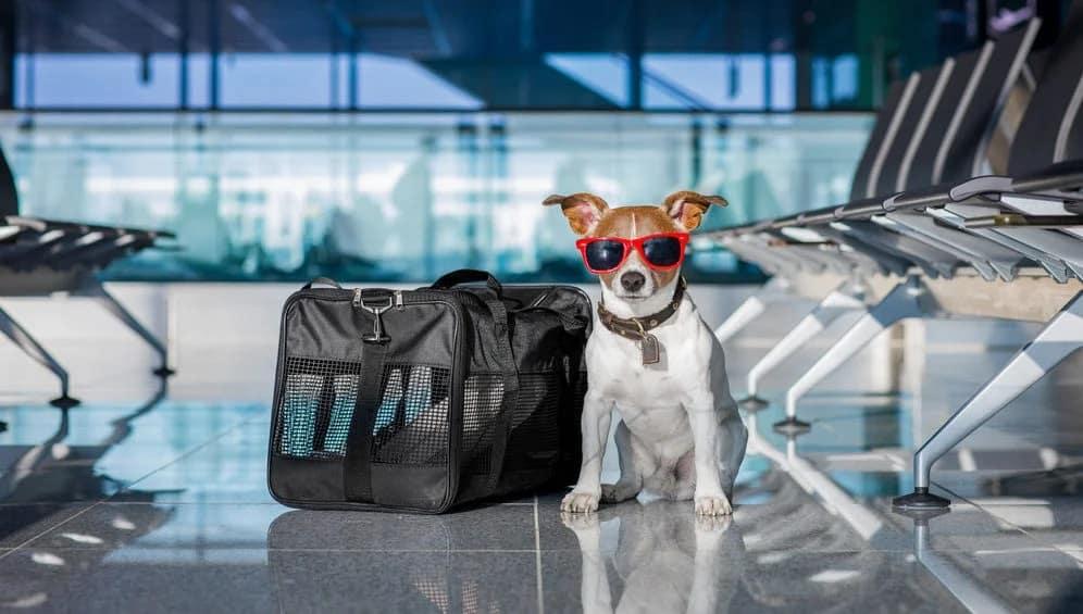 Pet Travel Guide - Top 9 Best US Pet Friendly Airports