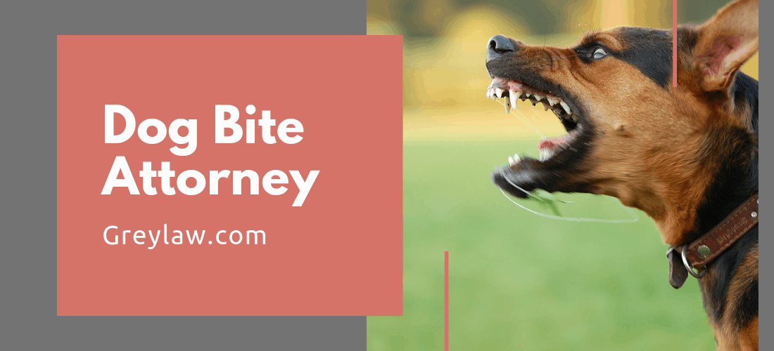 Filing An Insurance Claim With The Of A Dog Bite Lawyer: Is It Necessary