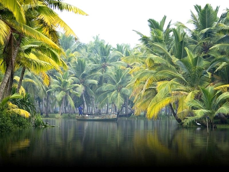 9 Top Things To Do When In Alleppey During The Tour